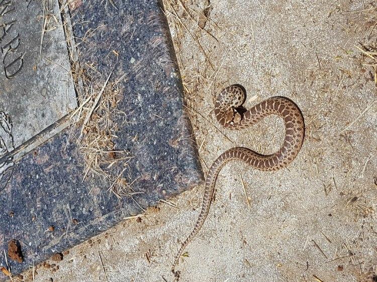 2020 Memorial Day snake 1