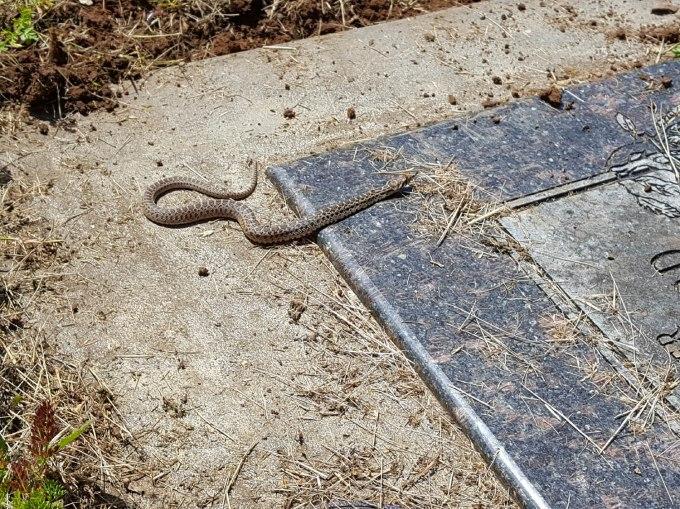 2020 Memorial Day snake 2